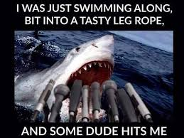 mick s shark memes the web finds the funny side magicseaweed