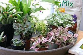 how to plant a fairy garden plants for shade