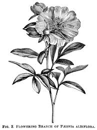Flower Flower In 2019 Vintage Flower Tattoo Vintage Botanical