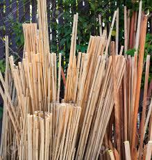 bamboo garden stakes. Delighful Bamboo Bin Full Of Bamboo Garden Stakes Vertical Stock Photo  80351768 To Bamboo Garden Stakes F