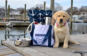 martha s vineyard is an excellent place to explore and have adventures especially with your four legged best friend at your side