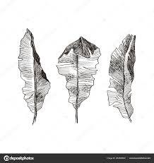 Set Leaf Exotics Vintage Vector Botanical Illustration Black White
