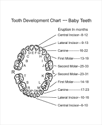 7 Baby Teeth Growth Chart Templates Free Sample Example