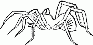 Image result for free images of spiders