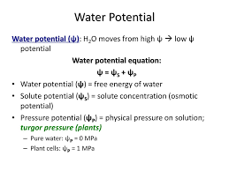 Water Potential Equation Understanding Water Potential Ppt Download