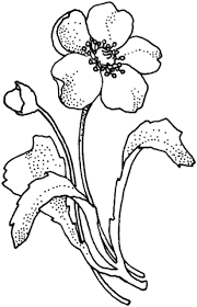 Rosemaling Coloring Pages For Download Free Jokingartcom
