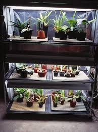 use a fluorescent light system if your home lacks sufficient bright light for orchids