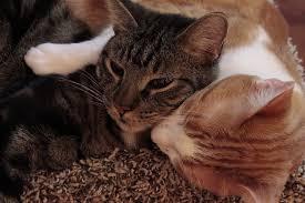 Katzen Sprüche Zitatelebenalle