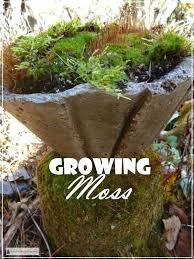 patio pavers with grass in between. How To Grow Moss Grass Between Patio Pavers With In