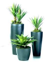 large indoor plants low light best tall house modern pots for