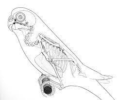 bird drawing tumblr flying. Contemporary Flying Image Result For Flying Bird Drawing Tumblr Throughout Bird Drawing Tumblr Flying