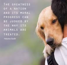 Animal Rights Quotes Interesting Animal Rights Quotes Askideas