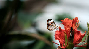 Red Flower Wallpaper Cute Child Butterfly On Red Flower 5k Wallpaper Hd Wallpapers