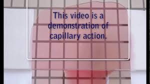 Demonstration Of Capillary Action