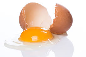 Image result for egg