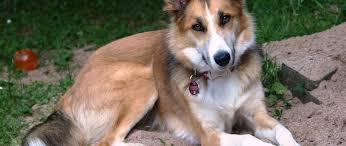 gebärmutterentzündung hund antibiotika behandeln