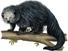 Small Picture Binturong Stock Art Illustration