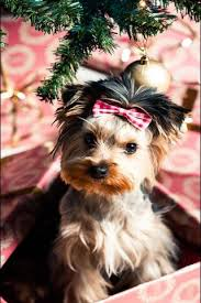 Christmas dogs live wallpaper apk. 4k Xmas Dog Wallpaper Download To Your Mobile From Phoneky