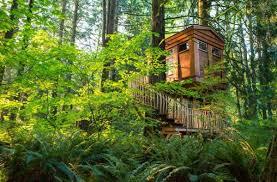 Glamping Tree House In Santa Cruz Mountains Near Monterey Bay Treehouse Vacation California