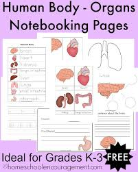 Small Picture FREE Human Body Organs Notebooking Pages for Grades K 3