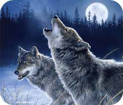 wolf howling. Delighful Wolf TAGS BY DESIGN HBMPD10771 WOLVES HOWLING MOUSE PAD 9u0026quot  Intended Wolf Howling H