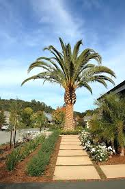 outdoor metal palm trees palm trees in landscape with mulch traditional outdoor wall art