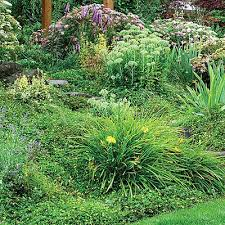 Small Picture 104 best Slope Plantings images on Pinterest Backyard ideas