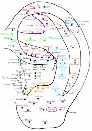 Auriculotherapy Chart Points Tcm Student Ear Chart