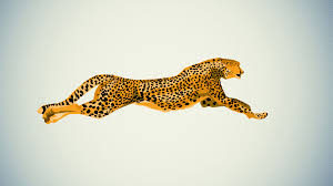 cheetah wallpapers hq 29037