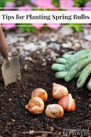 forgot to plant those spring bulbs it s not too late gardening n diy spring bulbs bulbs and forget