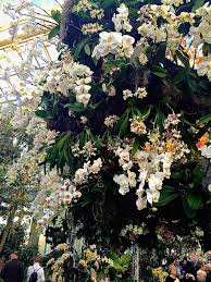 orchid show chandelier nybg it is a testament to the skill and artistry of designer francisca p coelho vivian and edward merrin vice president for