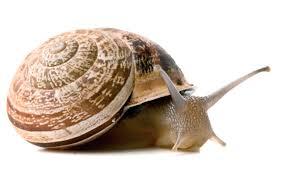 Resultado de imagen de caracoles