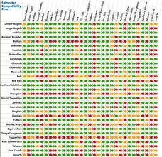 Saltwater Fish Compatibility Chart Most Popular Anemone Compatibility Chart 2019