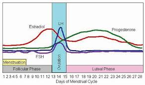 Estradiol Levels During Pregnancy Chart All About Estrogens Precision Nutrition