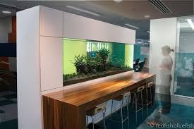 office aquarium. Office Aquarium Fish Tanks Auckland N