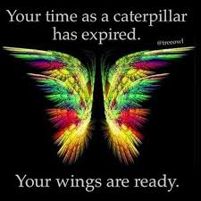 Image result for caterpillar to butterfly quote