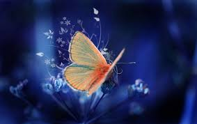 colorful butterfly wallpapers. Beautiful Colorful Orange Butterfly Wallpaper To Colorful Butterfly Wallpapers L