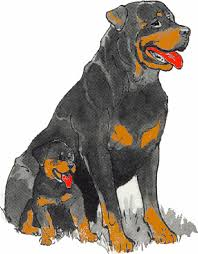 Small Picture Rottweiler Graphics and Animated Gifs