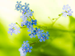 beautiful wallpapers of flowers