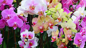 Plant Care Hydroponic Feed Schedule For Growing Orchids Indoor