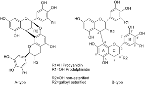 Auto, rad & boot (12). Bioactive Phenolic Compounds Metabolism And Properties A Review On Valuable Chemical Compounds In Scots Pine And Norway Spruce Springerlink
