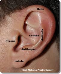 Stahl S Ear Under Fontanacountryinn Com