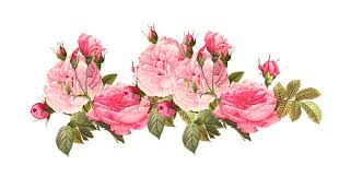 Image result for peony border clipart