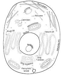 Cell Coloring Pages Plant Cell Coloring Page Animal Sheet Labeled