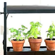 superb indoor herb garden light indoor herbs low light low light herbs indoor herb garden lights