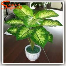garden plants names indoor plants pictures and names names of plants plastic pots for