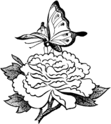 flower and butterfly coloring pages. Modren And Butterfly On A Flower Throughout And Coloring Pages R