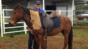 hughes has also taught his children how to train horses using this method after a motorbike accident left hughes with injuries and a nine month recovery