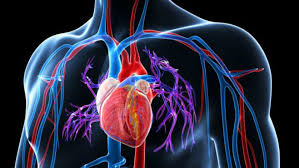Hipertensiunea arteriala - sanatate, medicina, tratament