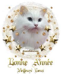 """Résultat de recherche d'images pour """"bonne année chat"""""""